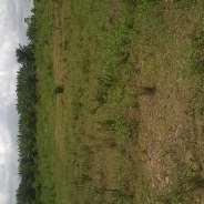 30 Acre registered land for sale @ Ashalaja Accra