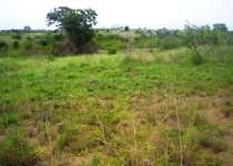 Geninue Land for Sale at Nsawam