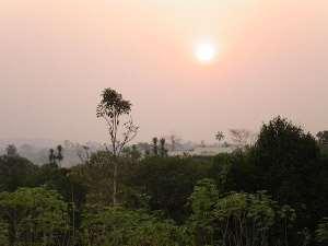Illegal Logging Still a Struggle in Cameroon