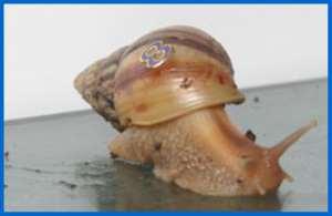 Farmers attend school on snail farming