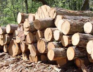 Rosewood Smuggling Reduced To Barest Minimum – Committee