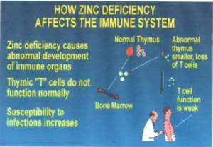 ZINC, You May Be At Risk For Zinc Deficiency