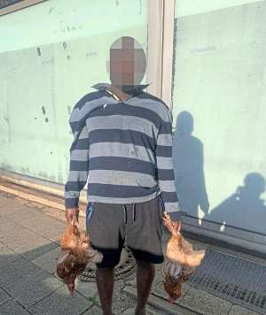 A witness exposed the chicken thief, before he could disappear by tram