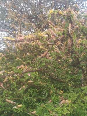 African Governments Must Not Take Desert Locust Invasion Lightly, PACJA