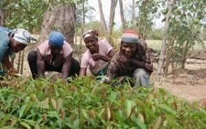 Kumasi Mayor Advocates Backyard Farming