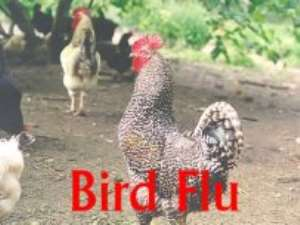 Bird flu virus 'now in two forms'