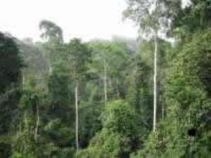 Efforts to restore lost vegetation initiated