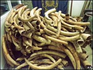 Ivory auction opens amid concerns