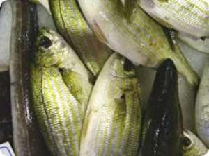 Fish farming receives boost