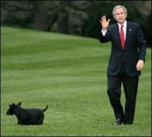 Bush's Dog Bites White House Reporter