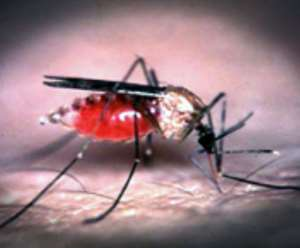 Road contractors contribute to increase in malaria