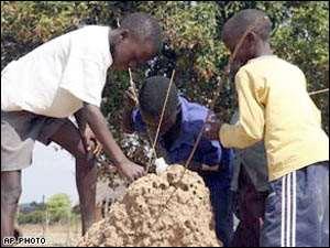 Zimbabweans Eat Termites To Survive