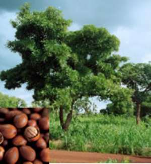Japanese grant for shea butter processors