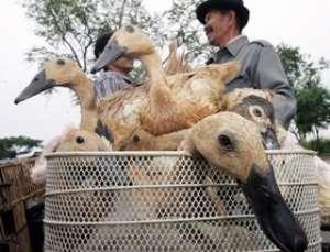 WHO sees no mutation in Indonesia bird flu strain