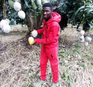 Meet Maxwell Kofi Lee: JHS Graduate And Young Ambitious Mango Farmer