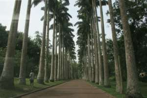 Tourist Choice: Visited The ABURI BOTANICAL GARDENS Yet?