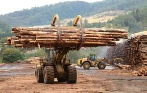 Gov't Tree Crop Dev't Authority To Boost Timber Export