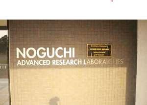COVID-19: Noguchi Memorial Institute Tests 100,000 Samples — Prof Annan Discloses