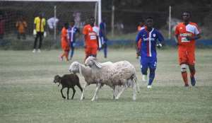 Sheep disrupts Liberty Prof. v Dwarfs game