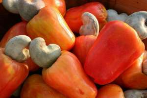 COVID –19: Negatively Impacting Ghana's Cashew Sector!!