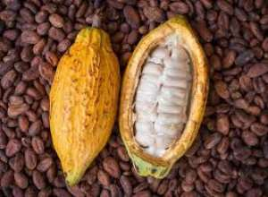 COCOA- For Optimal Health, Eat Cocoa Daily