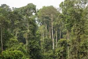 Covid-19: Global Community Warns Atewa Bauxite Mining Partners