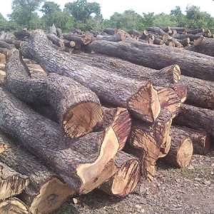 some logs of rosewood in northern Ghana