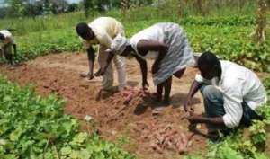 Planting For Export And Rural Development; Atwima Nwabiagya Municipality Is On Course