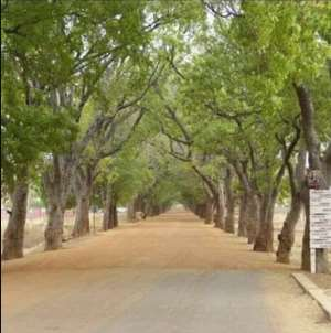 Don't Destroy The Trees By The Sandema Road