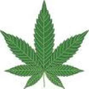 Cannabis is God's plant