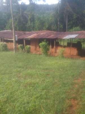 Students Abandon Death Trap JHS Classrooms For Okro Farming