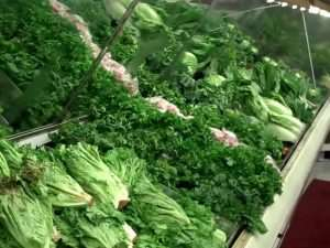 Ghana Risk Complete Ban By EU Over Leafy Vegetable—Ministry
