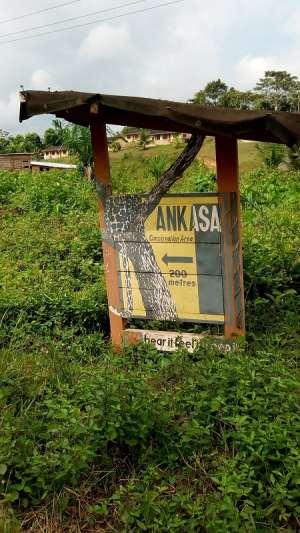 Old Ankasa Residents Climb Trees, Mountains To Make Calls Amidst Snake Bites