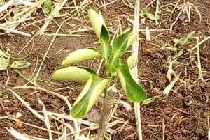 Lagos To Establish Fruit Orchards Trees In 20 Schools