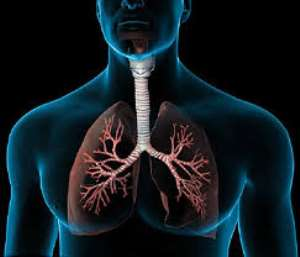 Looking after your lungs should not only happen once a year.
