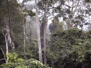 75% of Ghana's Forests Gone