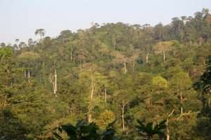 Asewa Forest Is