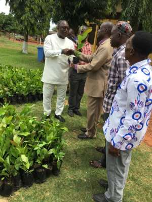 Techiman MCE Distributes 280,000 Poly- Clonial Cashew Seedlings To 1,000 Farmers