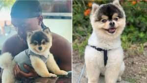 Daniel Sturridge Offers To Pay Anything For His Missing Dog