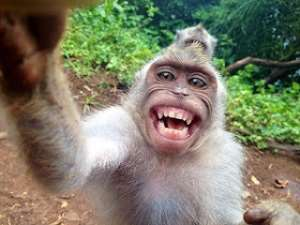The monkey laughs at shoddy research and bad scientists who want us to believe that human beings had acquired SIV from a monkey