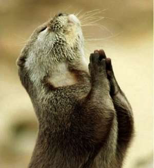 A beaver in a prayerful mood