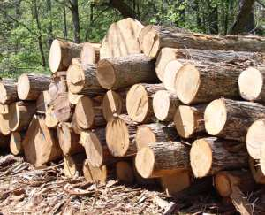 DCE Debunk Claims Of 20 Trucks Of Rosewood Hiding In Builsa South
