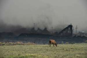 A cow grazes in front of the Mooifontein Colliery on the outskirts of Witbank, South Africa.  By Mujahid Safodien (AFP)