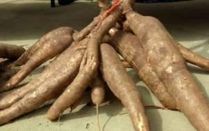 Nigerian farmers can now obtain free advisory services on cassava production via mobile phone