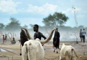 A herdsman from the Nuer tribe stands with his cattle at a camp near Nyal, South Sudan on November 11, 2011.  By Tony Karumba (AFP/File)