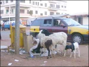 Tamale To Arrest Animals