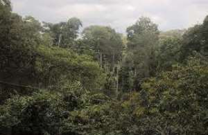 Should President Akufo-Addo  Pull Back From Allowing The Atewa Forest Reserve  To Be Destroyed?