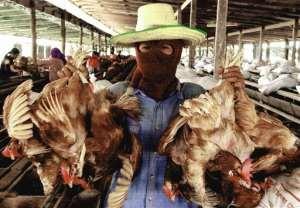 West African experts meet on bird flu control
