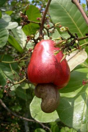 Review Defunct And Outmoded Law On Co-Operatives, Says AGRICOOPS