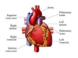 Urbanization Increasing Risk of Heart Disease in Children